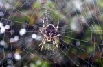 Ciri Ciri Laba Laba Dan Perbedaanya Dengan Tarantula