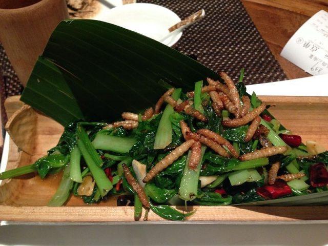Gambar kumbang ulat hongkong dan manfaatnya untuk manusia