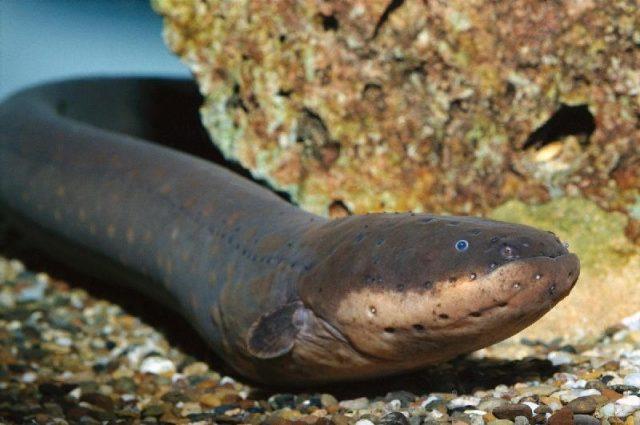 nama nama hewan laut dan gambarnya nama nama hewan rh majalahhewan com gambar macam-macam binatang air sebutkan macam macam binatang yang hidup di air