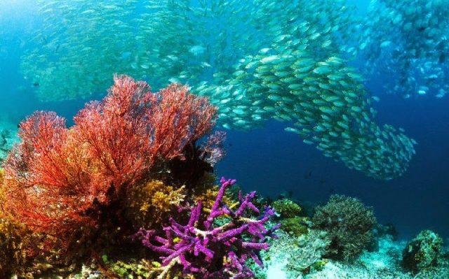 Gambar Nama Nama Hewan Laut Dan Gambarnya Ikan