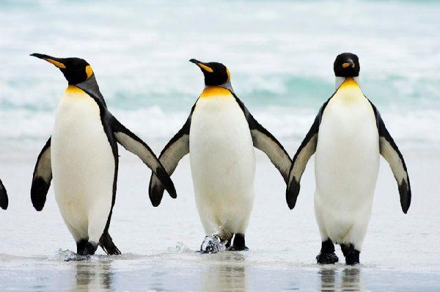 Gambar Nama Nama Hewan Laut Dan Gambarnya Pinguin Laut
