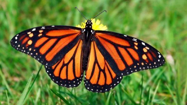 Gambar Nama Nama Hewan Dari A Sampai Z Yang Dimulai Dari Huruf B-Butterfly