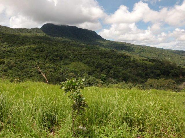 Gambar Habitat Elang Flores ( Flores Hawk-eagle )