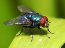 Gambar Fly - Nama Hewan Dari Huruf F