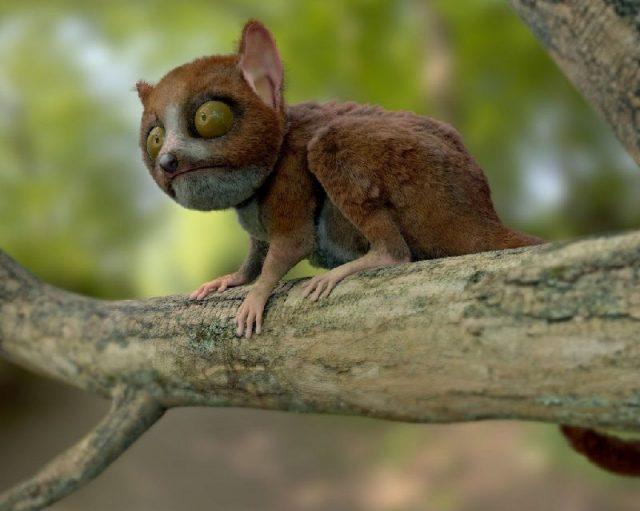 Gambar Grey Mouse Lemur - Nama Hewan Dari Huruf G