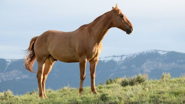 Gambar Nama Hewan Dari Huruf H - Horse