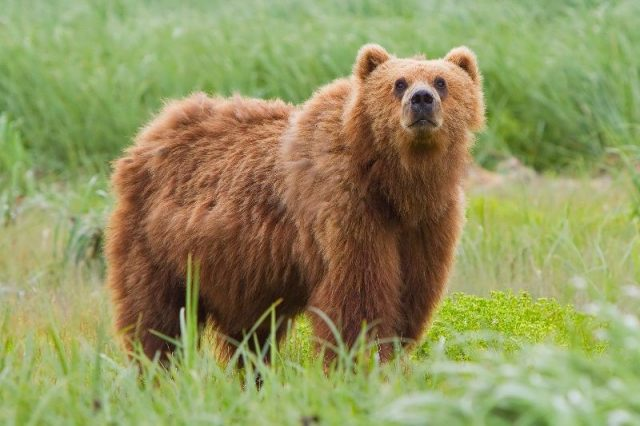 Gambar Nama Nama Hewan Dalam Bahasa Inggris Dan Gambarnya Bear