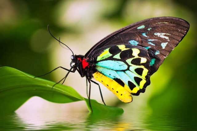 Gambar Nama Nama Hewan Dalam Bahasa Inggris Dan Gambarnya Butterfly