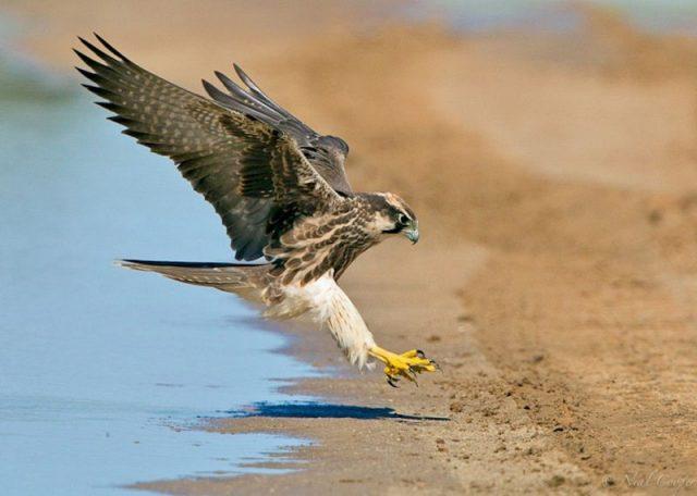 Gambar Nama Nama Hewan Dalam Bahasa Inggris Dan Gambarnya Falcon