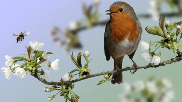 Gambar Nama Hewan Dari Huruf N Nightingale