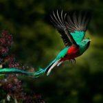 Gambar Nama Hewan Dari Huruf Q Quetzal