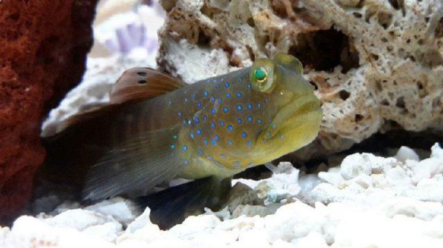 Gambar Ikan Hias Air Laut