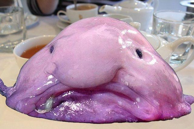 Gambar Ikan Di Lautan Dalam Blobfish