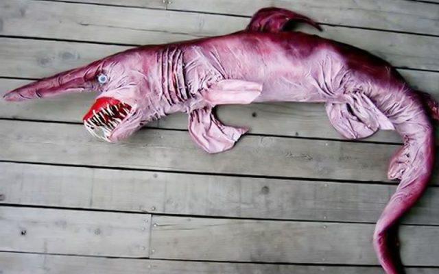 Gambar Ikan Di Lautan Dalam Goblin Shark