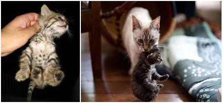 Gambar menggendong kucing liar