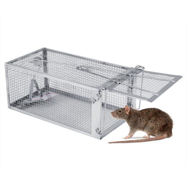 gambar Cara Mengusir Tikus Dengan Cuka Dan Perangkap Tikus