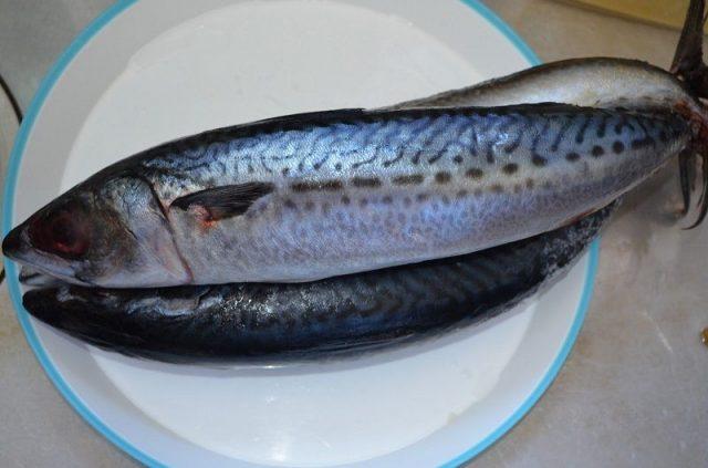 Gambar Harga Ikan Laut - Ikan Makarel