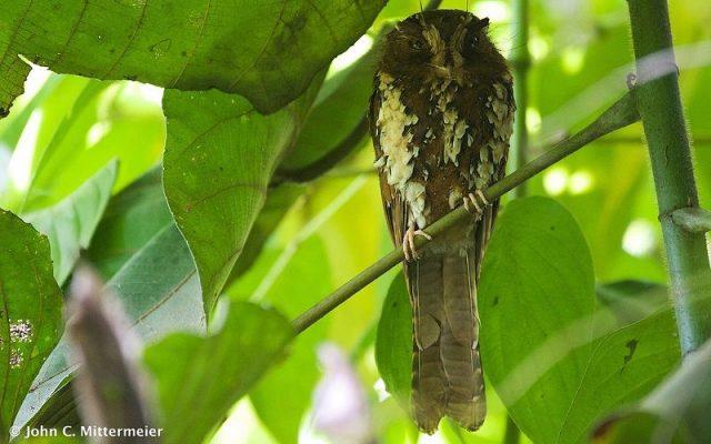 Gambar Nama Nama Burung Dan Gambarnya Dari Huruf A - Atoku besar