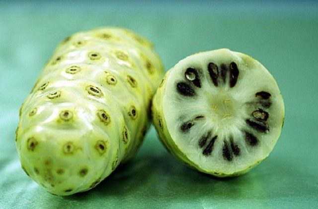 Gambar cara mengusir tikus dari rumah paling ampuh dengan buah mengkudu