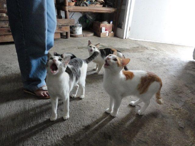Gambar cara mengusir tikus dari rumah paling ampuh dengan memelihara kucing