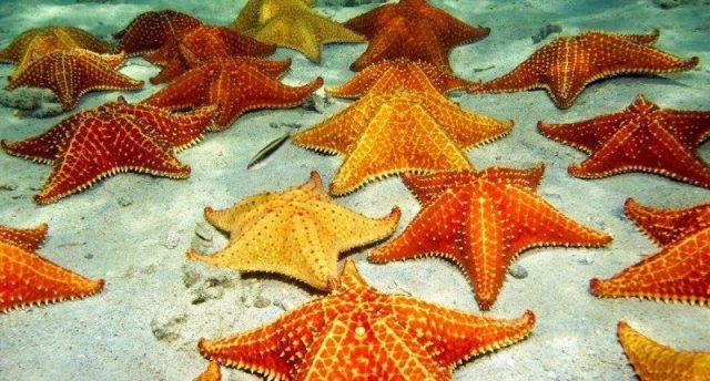 Gambar Nama Nama Hewan Laut Dan Gambarnya Bintang Laut
