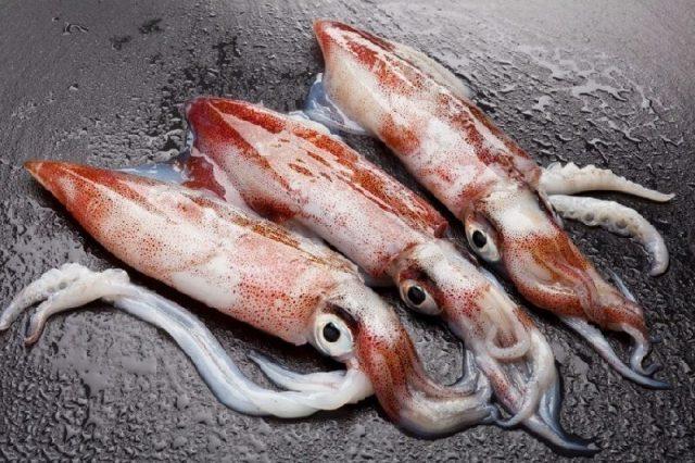 Gambar Nama Nama Hewan Laut Dan Gambarnya Cumi Laut