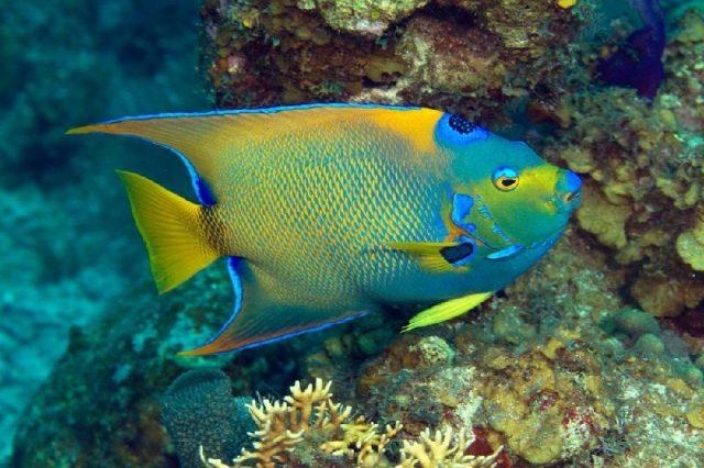 Gambar Nama Nama Ikan Laut Dan Gambarnya Injel