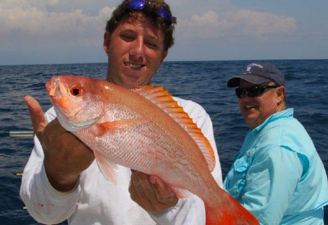 Gambar Nama Nama Ikan Laut Dan Gambarnya Kakap Vermilion