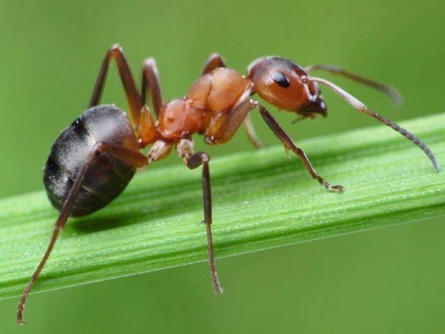 Gambar Ant Nama Nama Hewan Dari A Sampai Z Yang Dimulai Dari Huruf A
