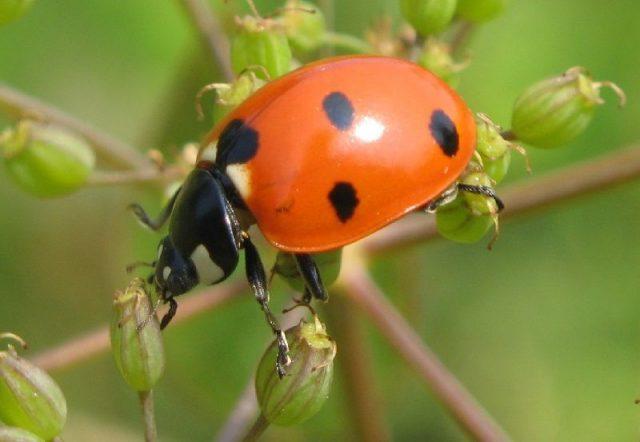 Gambar Nama Nama Hewan Dari A Sampai Z Yang Dimulai Dari Huruf B-Beetle