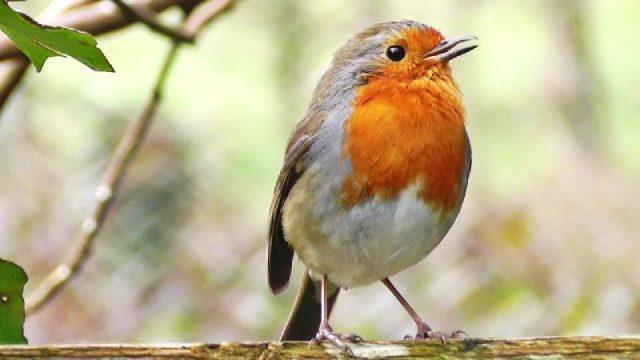 Gambar Nama Nama Hewan Dari A Sampai Z Yang Dimulai Dari Huruf B-Bird