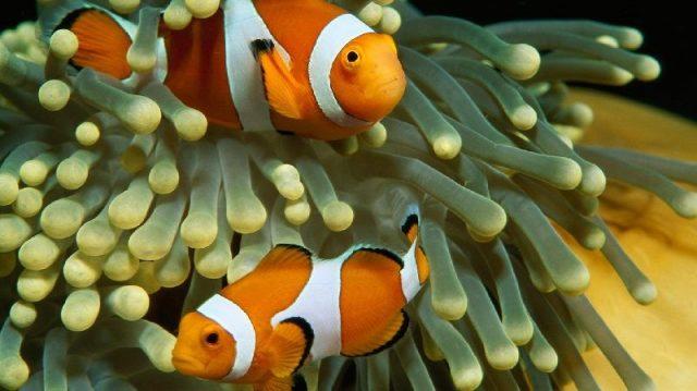 Gambar Fish - Nama Hewan Dari Huruf F