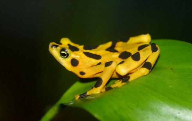 Gambar Frog - Nama Hewan Dari Huruf F