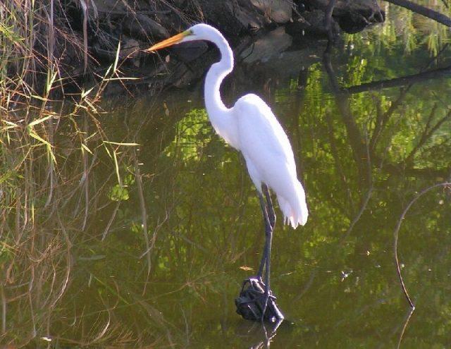 Gambar Nama Nama Hewan Dalam Bahasa Inggris Dan Gambarnya Crane bird