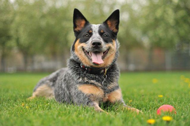 Gambar Nama Nama Hewan Dalam Bahasa Inggris Dan Gambarnya Dog