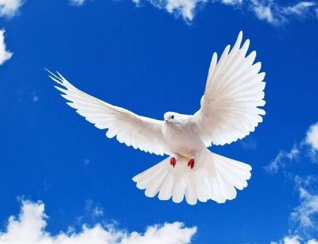 Gambar Nama Nama Hewan Dalam Bahasa Inggris Dan Gambarnya Dove
