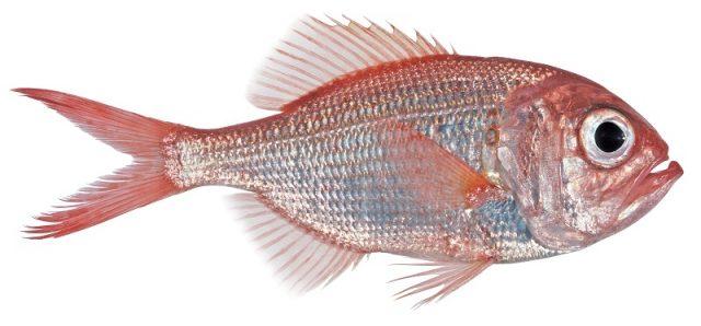 Gambar Nama Nama Hewan Dalam Bahasa Inggris Dan Gambarnya Fish