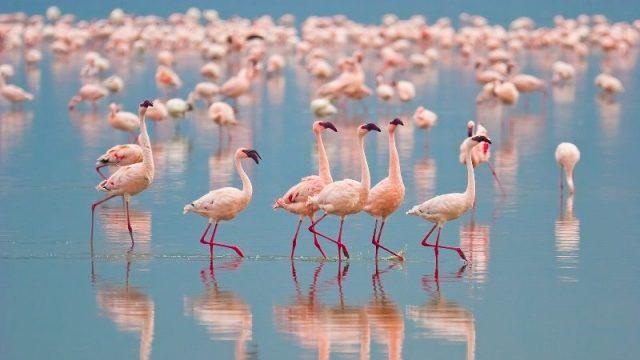 Gambar Nama Nama Hewan Dalam Bahasa Inggris Dan Gambarnya Flamingo
