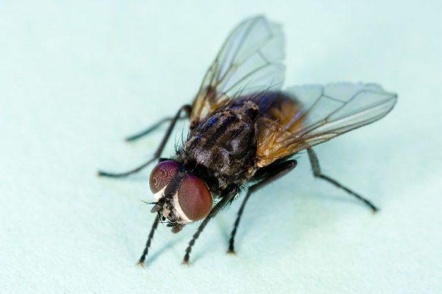 Gambar Nama Nama Hewan Dalam Bahasa Inggris Dan Gambarnya Fly