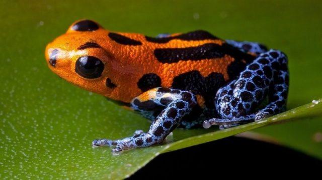 Gambar Nama Nama Hewan Dalam Bahasa Inggris Dan Gambarnya Frog