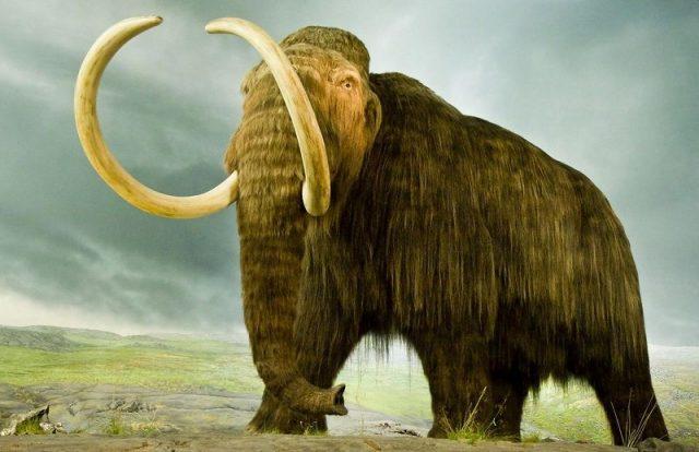 Gambar Nama Nama Hewan Dalam Bahasa Inggris Dan Gambarnya Mammoth