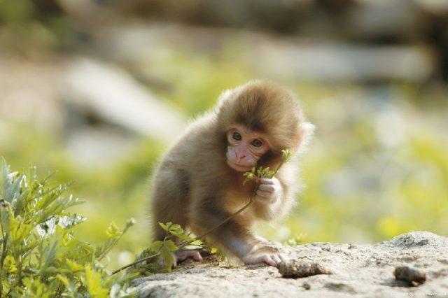 Gambar Nama Nama Hewan Dalam Bahasa Inggris Dan Gambarnya Monkey