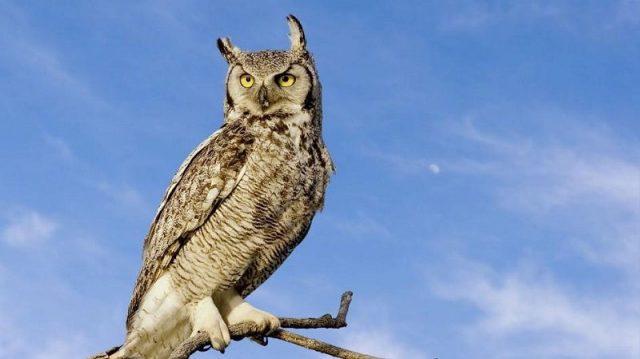 Gambar Nama Nama Hewan Dalam Bahasa Inggris Dan Gambarnya Owl
