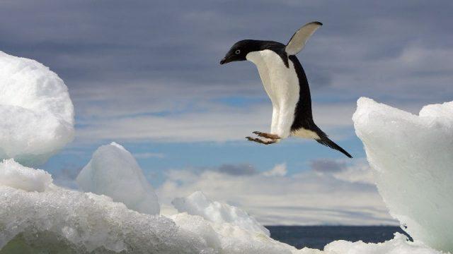 Gambar Nama Nama Hewan Dalam Bahasa Inggris Dan Gambarnya Penguin