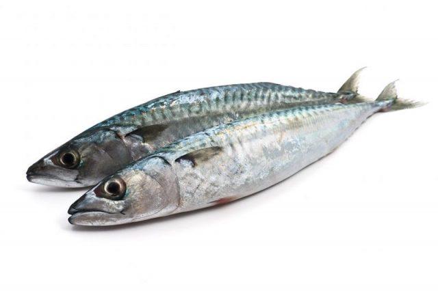 Gambar Nama Nama Hewan Dalam Bahasa Inggris Dan Gambarnya Sardine