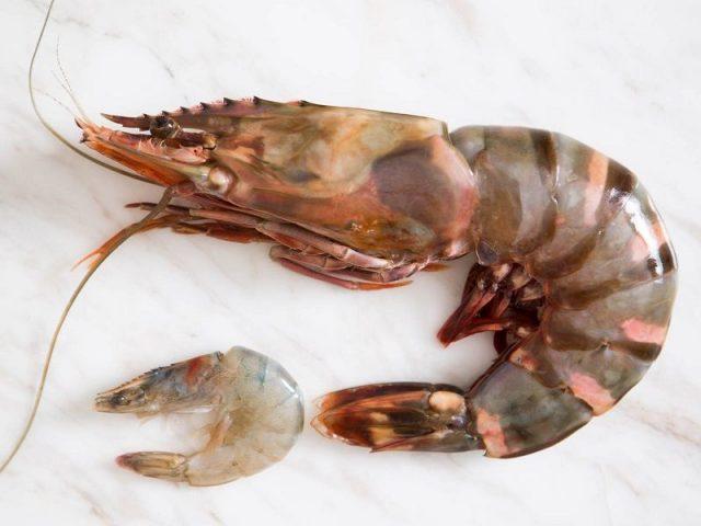 Gambar Nama Nama Hewan Dalam Bahasa Inggris Dan Gambarnya Shrimp