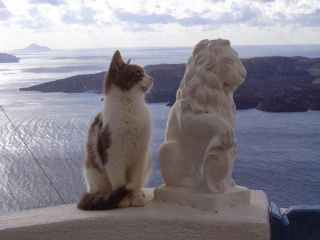 Gambar Sifat Kucing Aegean