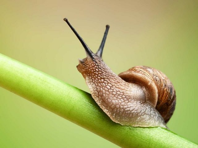 Gambar Nama Nama Hewan Dalam Bahasa Inggris Dan Gambarnya Snail