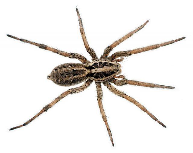 Gambar Nama Nama Hewan Dalam Bahasa Inggris Dan Gambarnya Spider