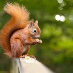 Gambar Nama Nama Hewan Dalam Bahasa Inggris Dan Gambarnya Squirrel